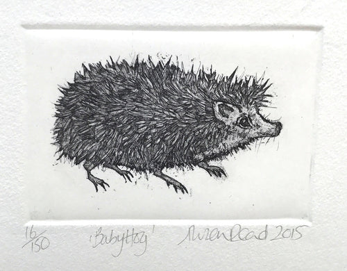 Baby Hog by Alison Read