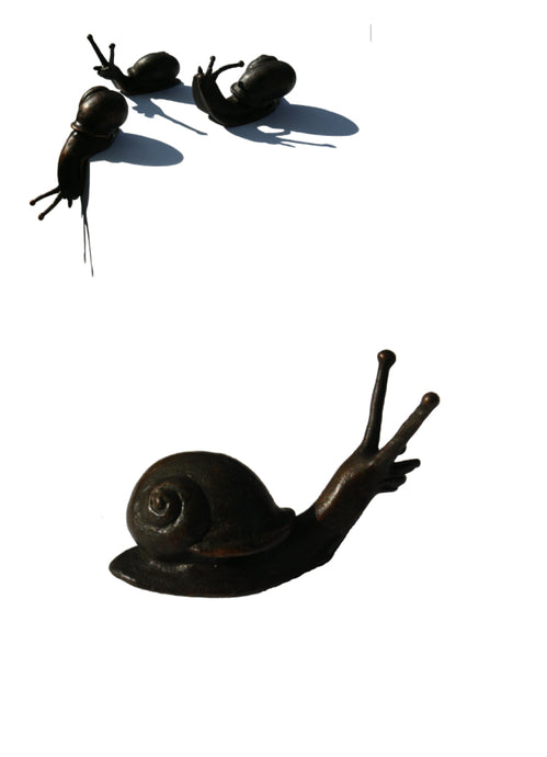 Snails by David Meredith