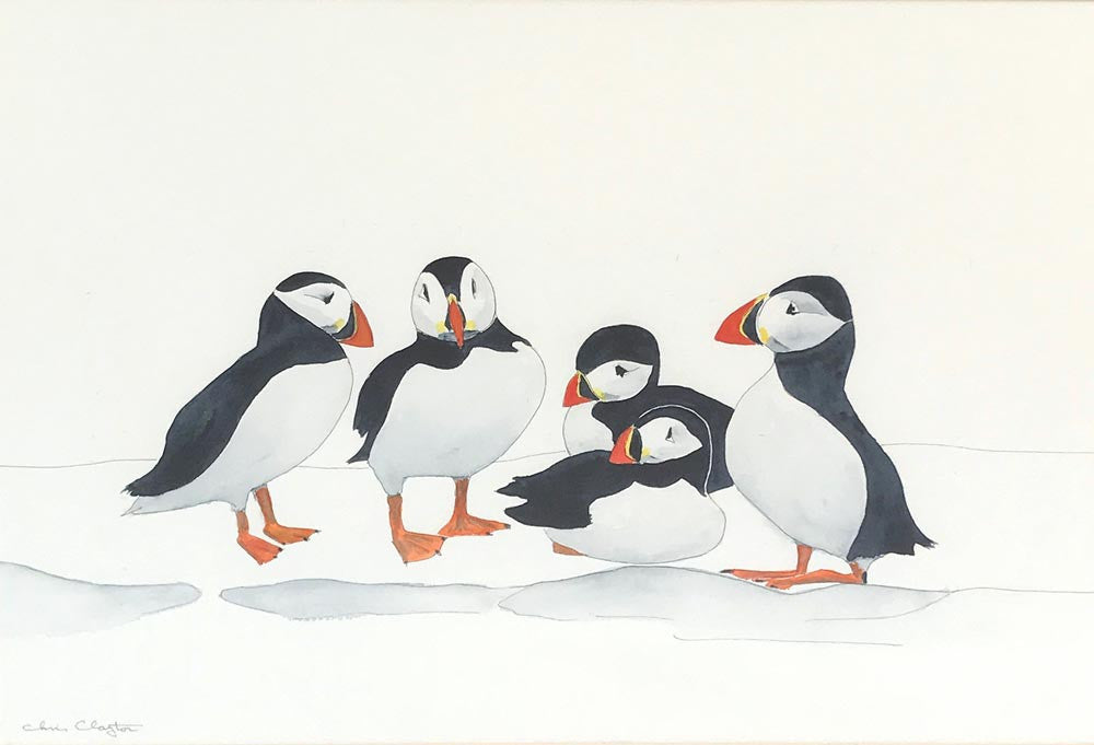 Puffins by Christopher Clayton