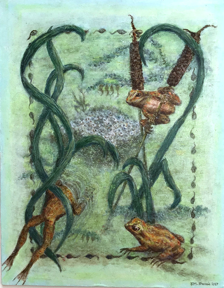 Amphibian Life Cycle by Jean Francis
