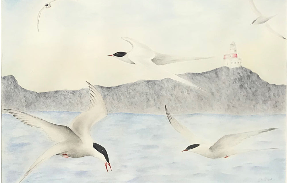 Arctic Terns at The Skerries, Anglesey by Judith Gibson