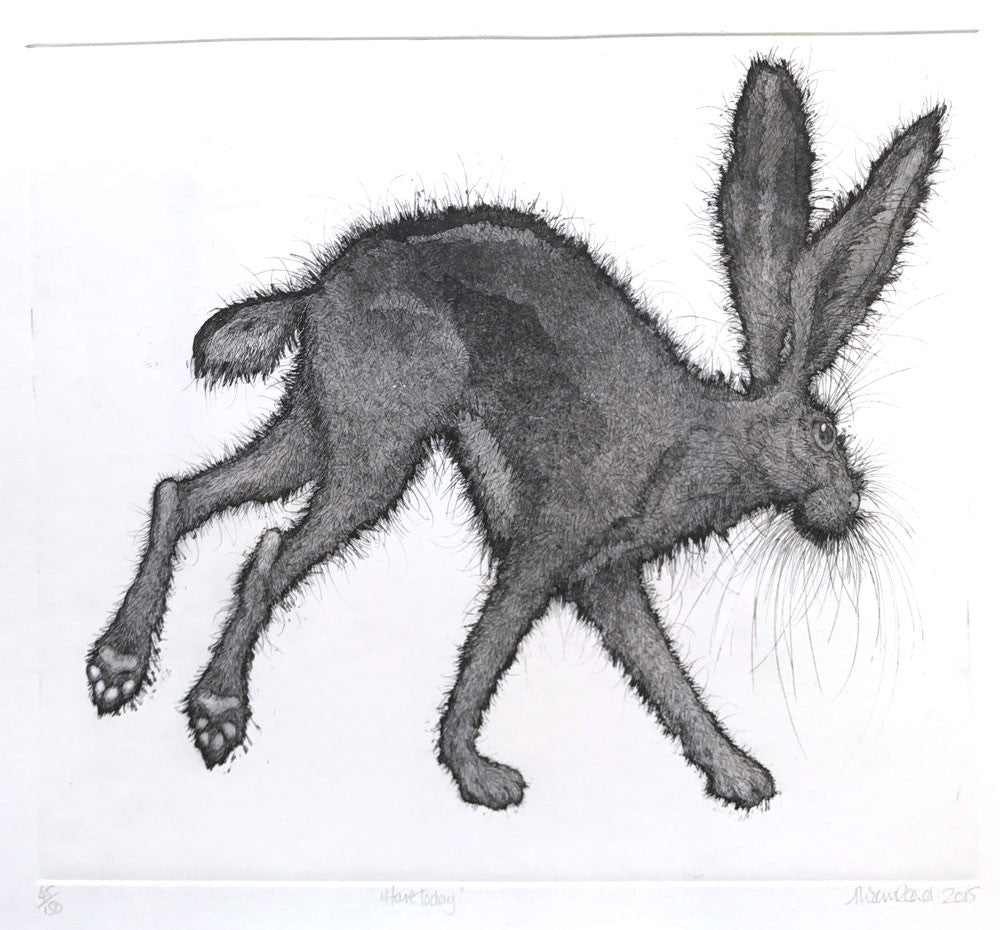 Hare Today by Alison Read