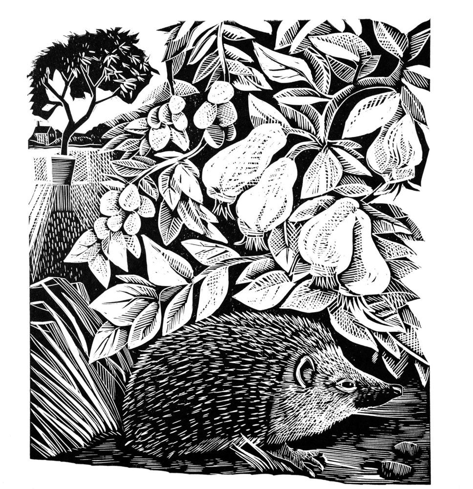 Hidden Hedgehog by Angela Harding