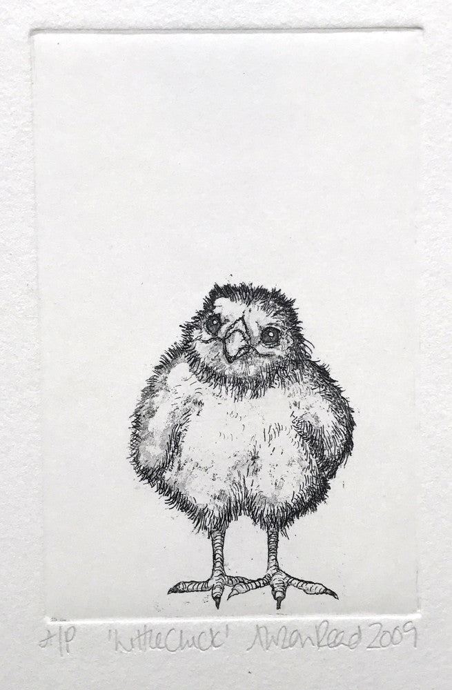 Little Chick by Alison Read