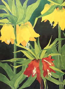 Fritillaria by Mary Rodgers