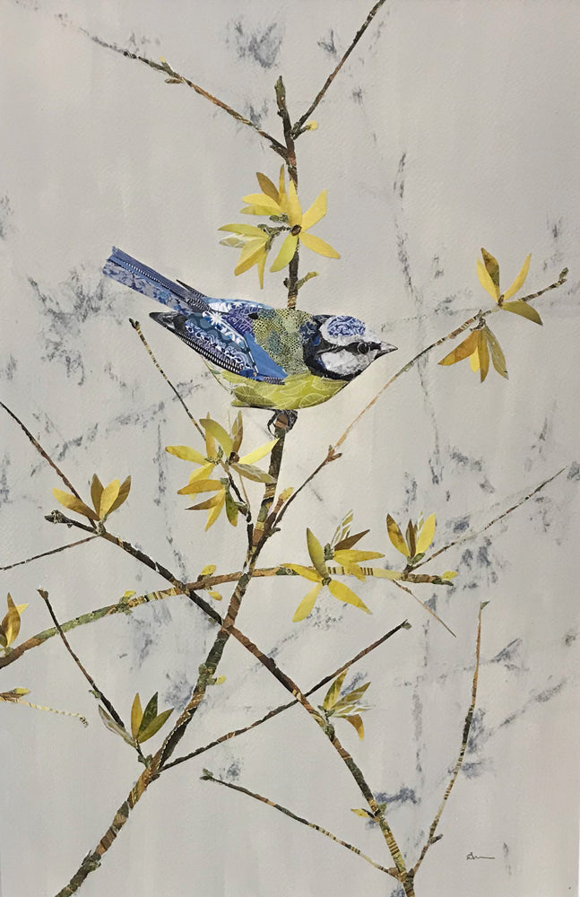 Blue Tit and Forsythia by Louise Wood