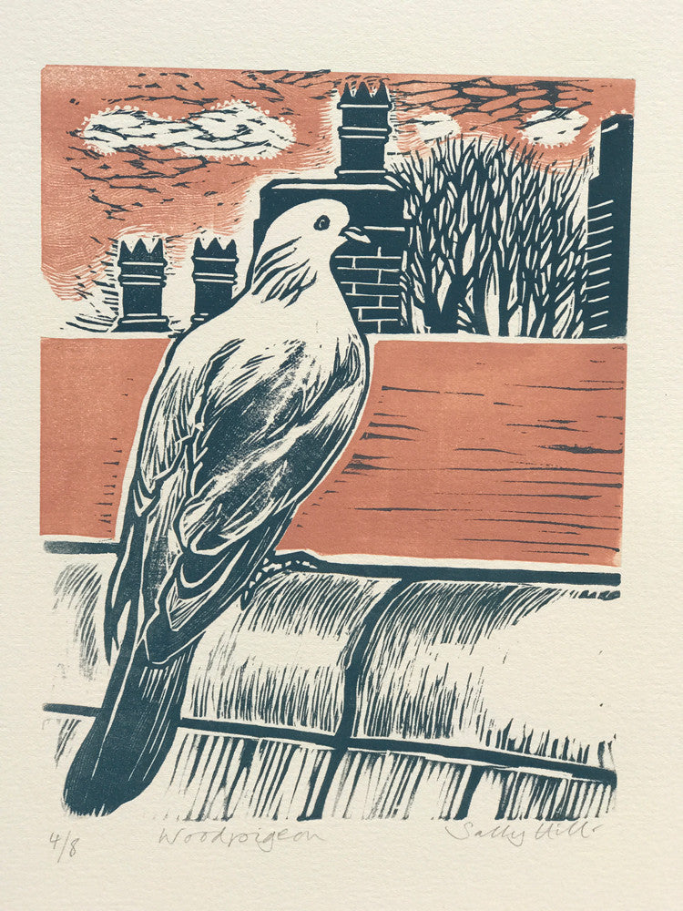 Woodpigeon by Sally Hill