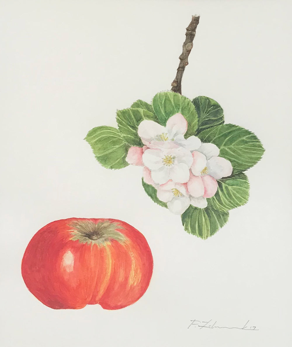 Apple and Blossom by Peter Zelenczuk