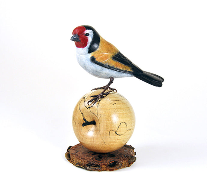 Goldfinch on Apple by David Meredith