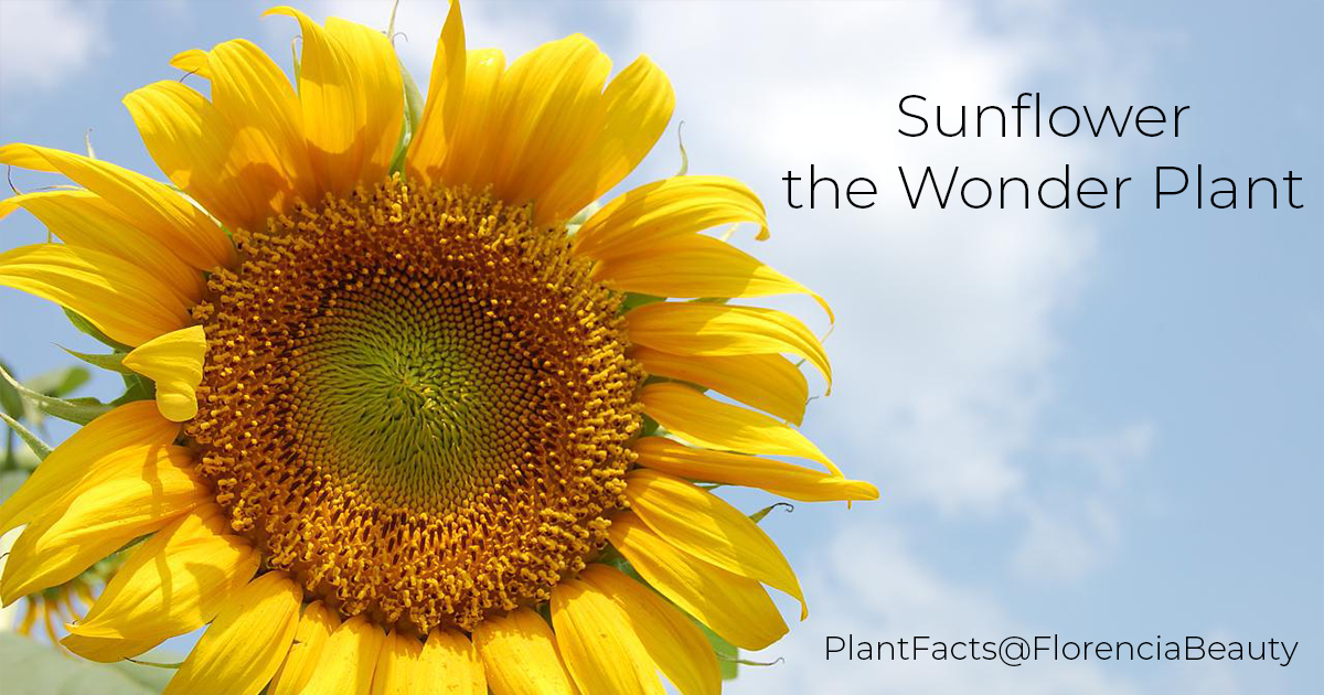 Sunflower - the Wonder Plant