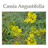 Cassia Angustifolia Source of Botanical Hyaluronic Acid
