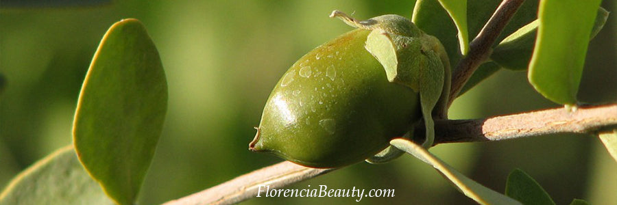 Jojoba Oil in Skincare