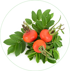Rosa Canina Fruit Extract