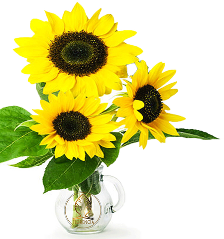 Vase with Sunflowers. Benefits of Sunflower Seed Oil in skincare Florencia beauty