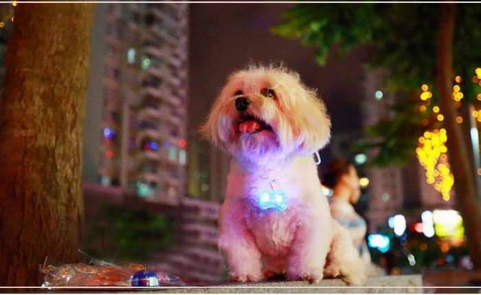 LED & Other Dog Collars, Leashes & Harnesses - LED Flash Blink Light Tag Collar