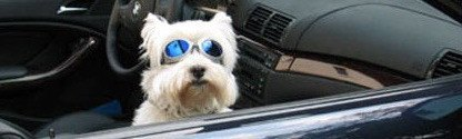 Sunglasses - Dog Sunglasses