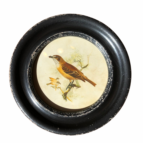 Round Framed Bird Wall Decor