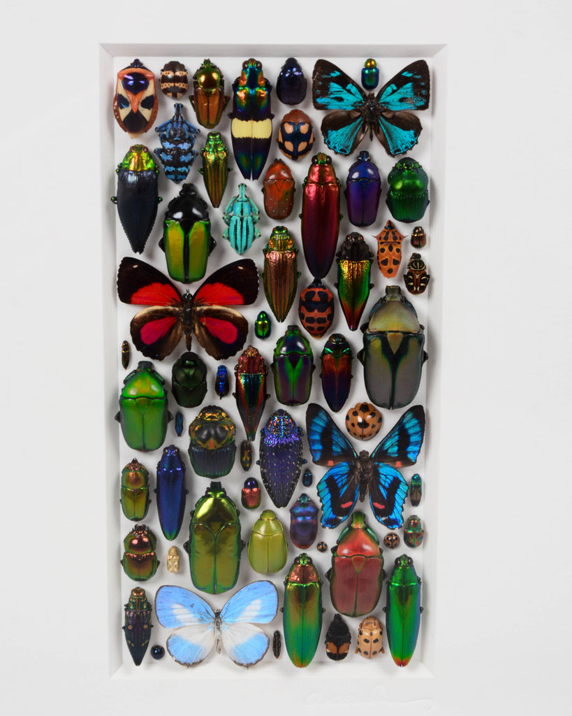 Aesthetica Insect Mosaic