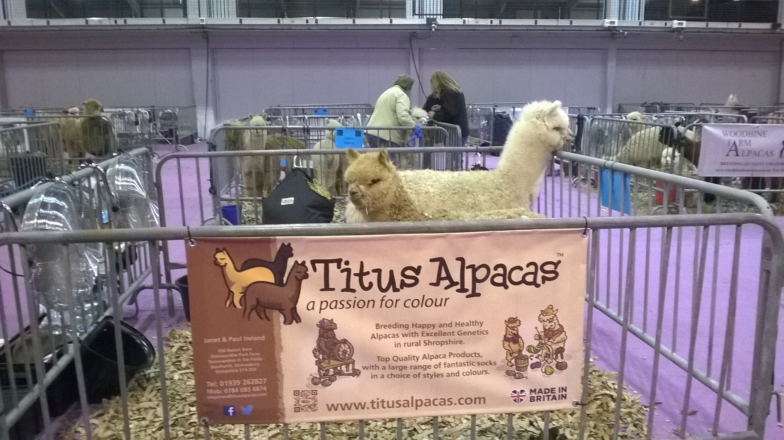 British Alpaca Society National Show