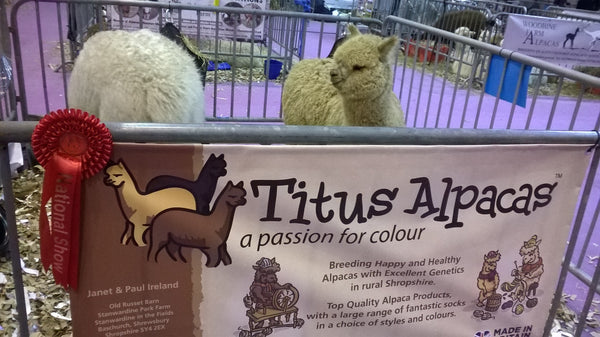 National Alpaca Show, Telford 2018