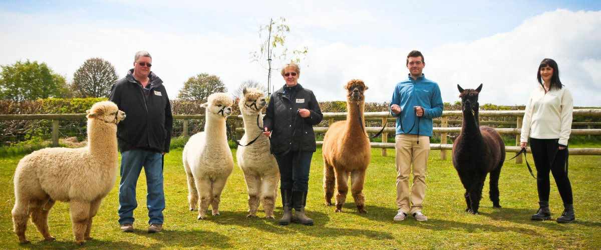 Alpaca Handling and Management