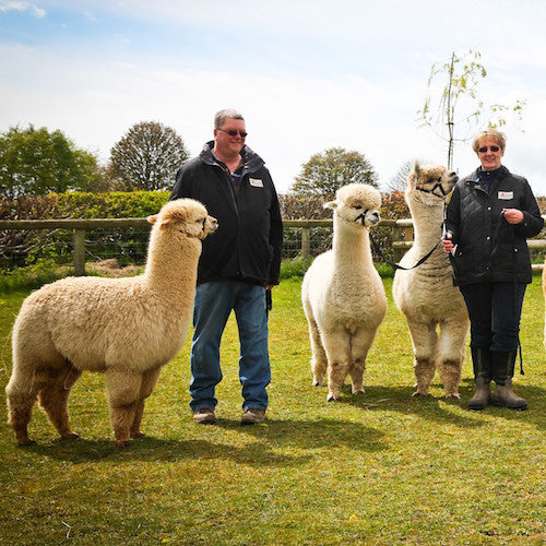 Join Our Alpaca Club