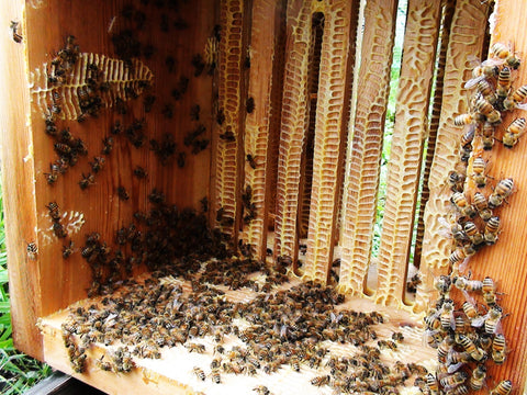 Warré Hive Box After Harvest - Copyrights RebelBees 2016