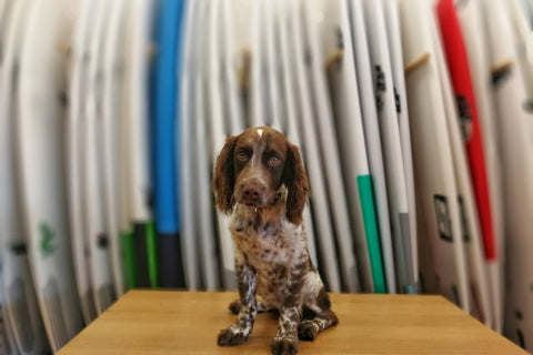 mango surf shop dog