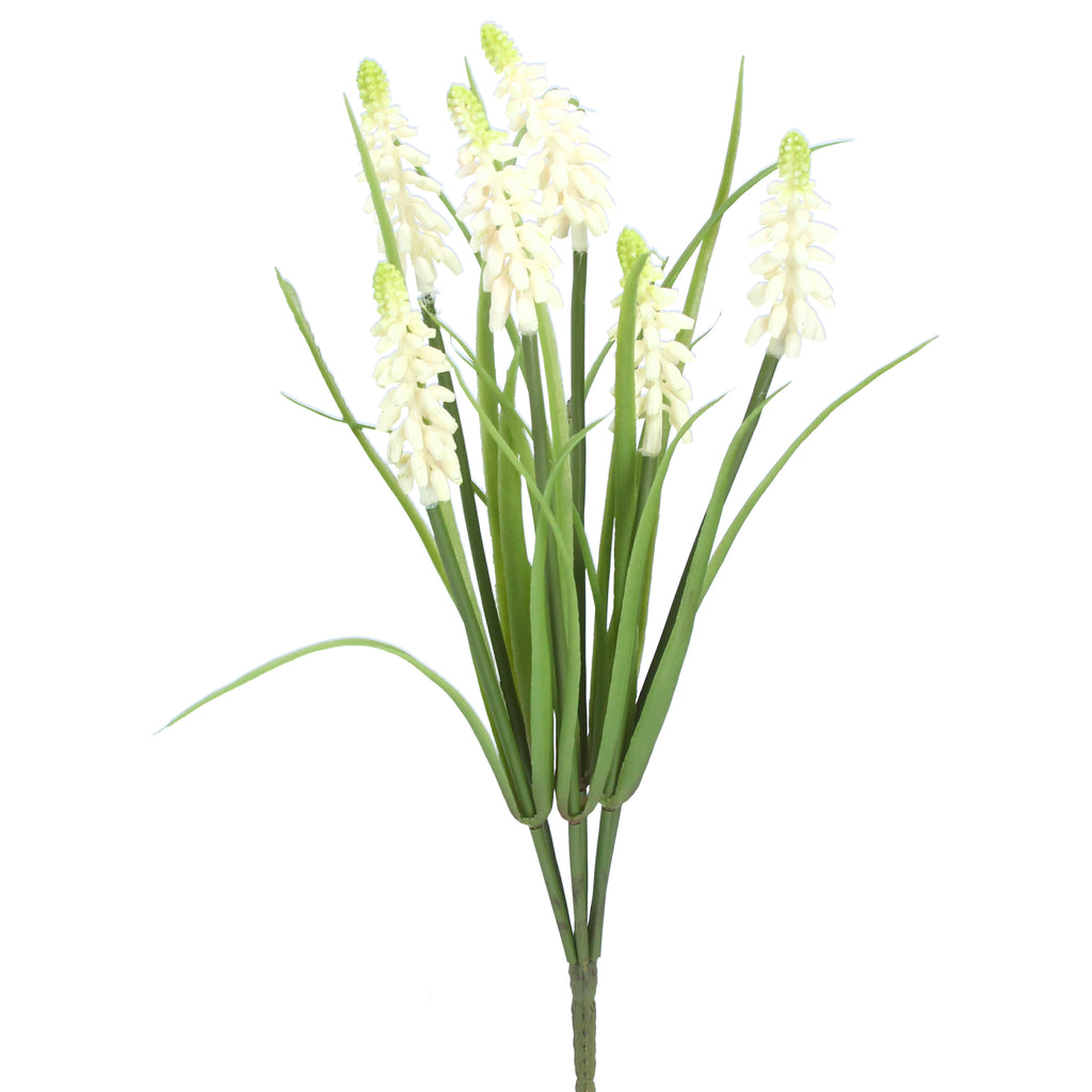 White Muscari Bunch