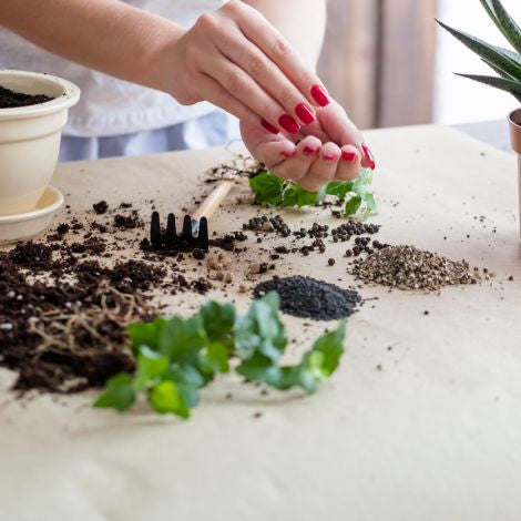 Seed Saving with Bob Wildfong from Seeds of Diversity Canada (Ages 18+) -- March 23, 2019, 2:30 - 3:30pm