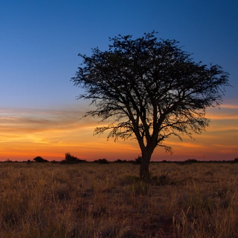 Cambridge Third Age Learning: 30 Days Walking Across the Kalahari with Alastair Summerlee (Ages 18+) -- November 9, 10:00am-12:00pm