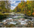 Hoffman Fabrics Call of the Wild River Forest Panel R4612-700-Rusty