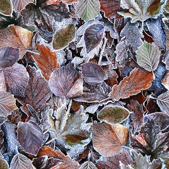 Hoffman Fabrics Fresh Freeze Frosted Leaves S4711-113-Frost