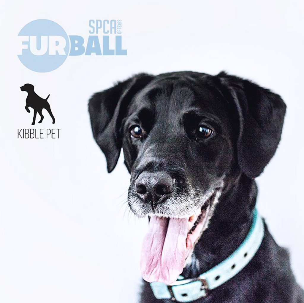 SPCA of Texas's Fur Ball
