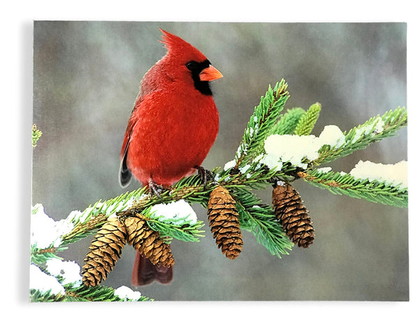 Winter Cardinal Print - LED Lighted Canvas Print - Red Cardinal Bird on a Birch Branch with Pine Cones and Snow