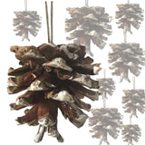 BANBERRY DESIGNS White Tipped Pinecone Ornaments