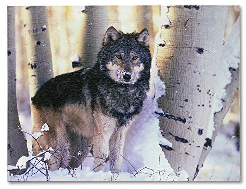 Light Up Wolf Picture - LED Lighted Canvas Print - Grey Wolf in a Snowy Winter Forest Scene with Birch Trees - 16x12 Inch