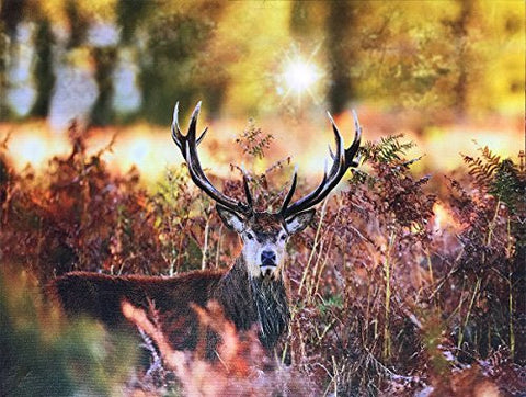 Deer Picture - LED Big Buck Wrapped Canvas Print - Light Up Wildlife Artwork with a Deer in a Field - Radiant Canvas Print(2502)