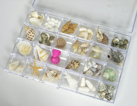 Sea Shells Bulk Assorted Variety Mix in Organizer Tray Box - 24 Varieties for Crafting Jewelry Making