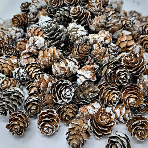 White Washed Pinecones