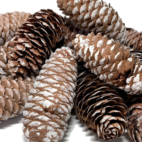 BANBERRY DESIGNS Sugar Pine Cones Set of 14 (3480)