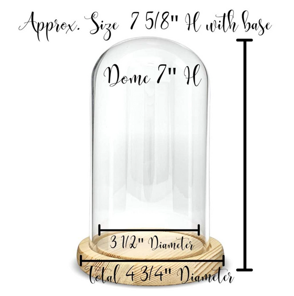 "Protective Glass Display - Approx 7"" X 4 3/4"" inch Dome Cloche - Bell Jar Decorative Glass Cover with Natural Wood Base"