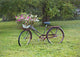Vintage Rusty Bicycle With Flowers Country Farmhouse Rustic Decor - Catch A Star Fine Art