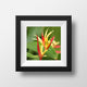 Bird of Paradise Flower Photography Print - Catch A Star Fine Art