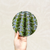 Round Art Sticker - Cactus Closeup - Catch A Star Fine Art