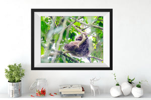 May 2020 - SLOTH Art Print