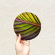 Round Art Sticker - Palm Leaf - Catch A Star Fine Art