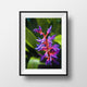 Purple Orchid Photo, Nature Photography - Catch A Star Fine Art