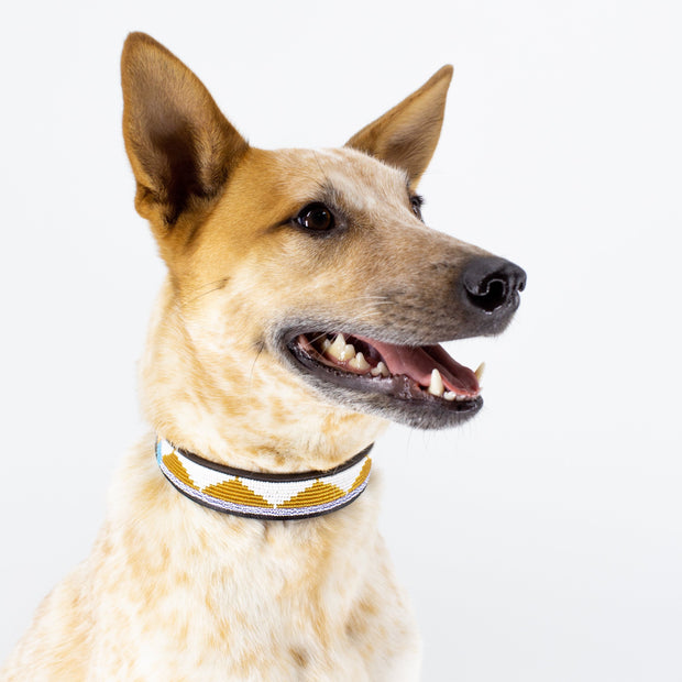 Amber Triangle Dog  Collar