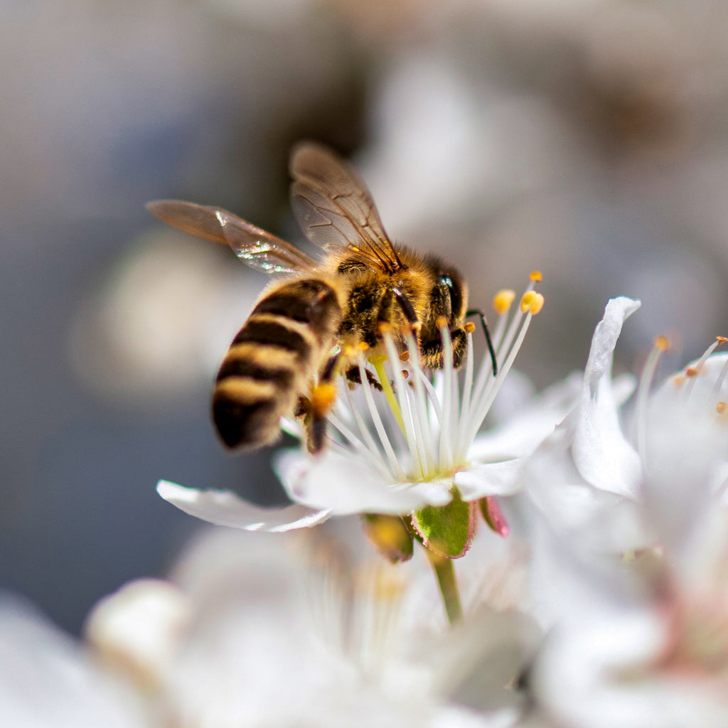 A Symbiotic Relationship: Flowers & Bees
